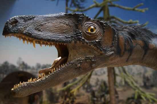 prehistoric-times-urtier-museum-exhibit-161959.jpeg