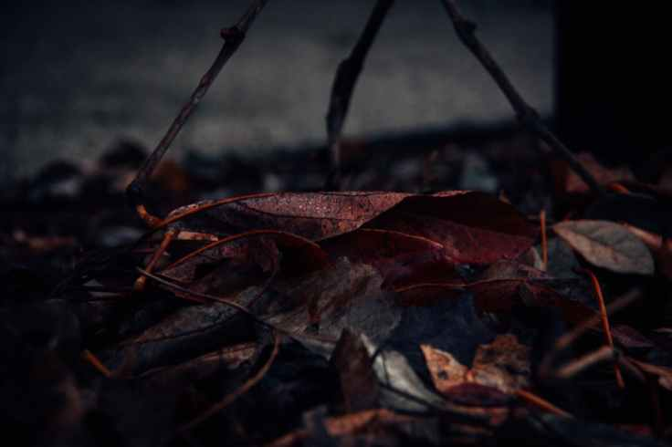 close up photography of fallen leaves