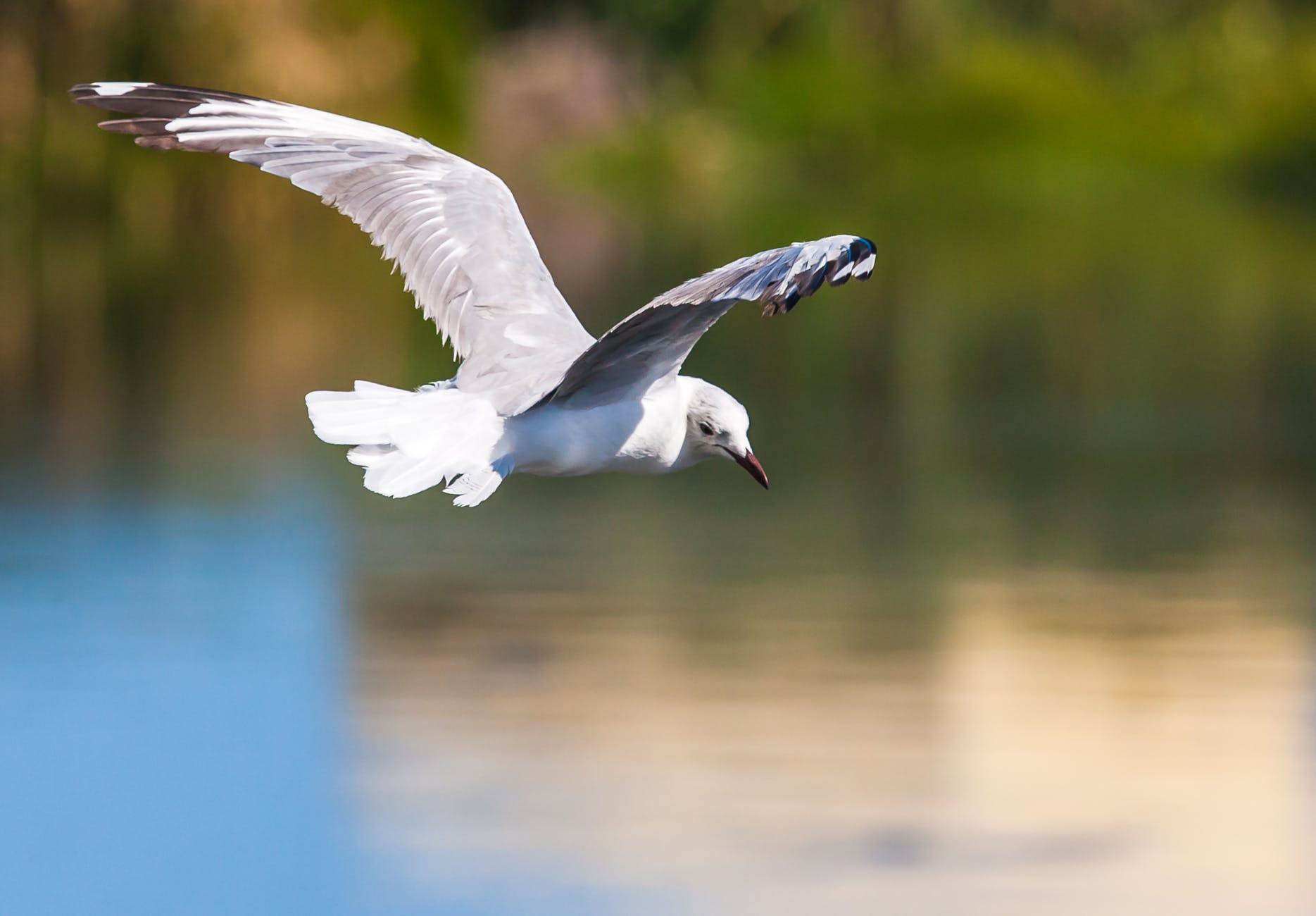 flying white bird above body of water