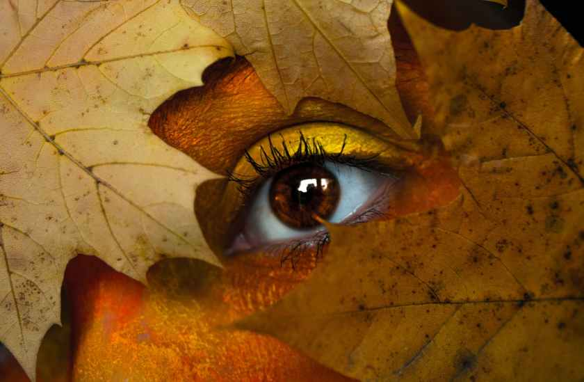 brown maple leaf with person s eye
